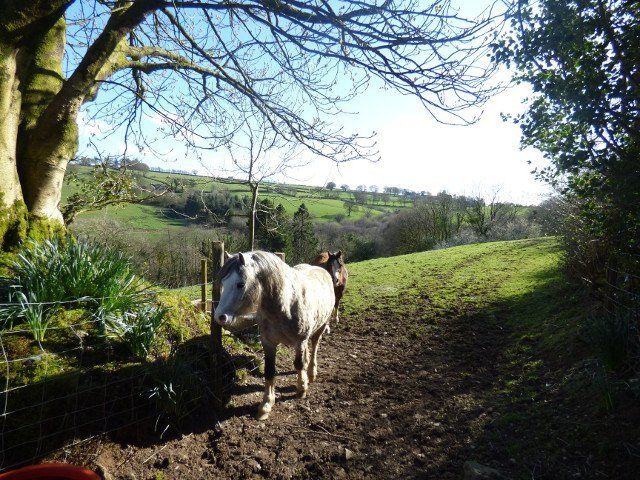 Horses in The Three Spaniels fields