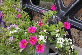 flowers in bloom by shepherd's hut wheel